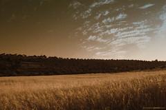 Wheat fields!