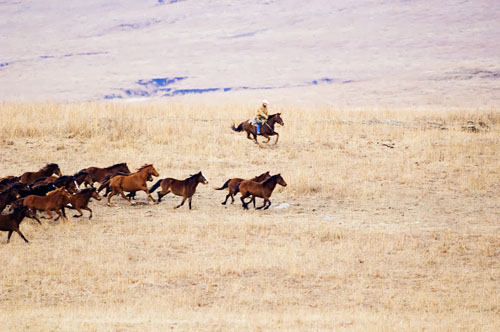 gathering mares 023