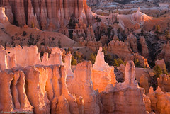 Bryce Canyon Aglow (Marc Shandro) Tags: orange sunrise utah glow canyon hoodoo bryce brycecanyon gettyimages visipix