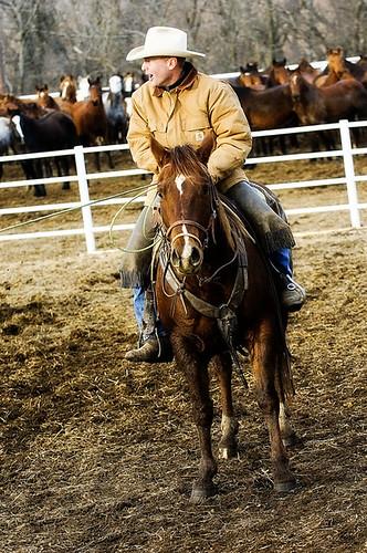 gathering mares 264