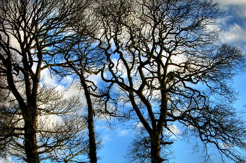 Just  trees and sky