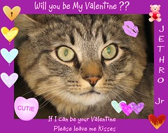 Can J.R. be your Valentine (Yvonne in Willowick Ohio) Tags: cats cute fuzzy adorable fluffy kisses valentines meow loveable cutefaces cuteeyes catkisses happpyvalentinesday