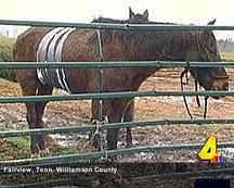 Kinship Circle - 2008-02-08 - Help Animals Displaced In Tennessee Tornadoes 06 by smiteme