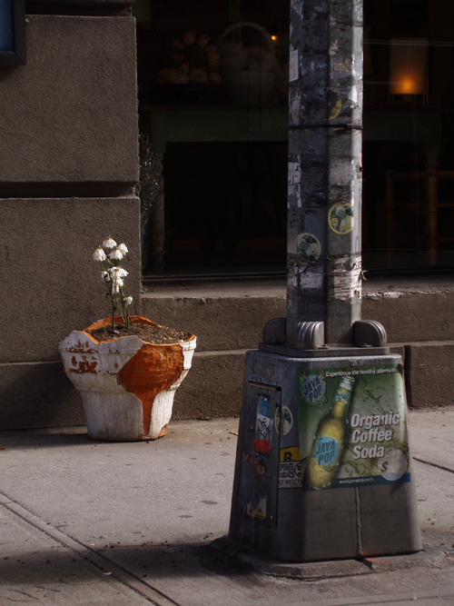 flower pot on sidewalk, Manhattan