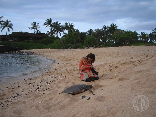 shhhhhhh.... the sea turtles are sleeping