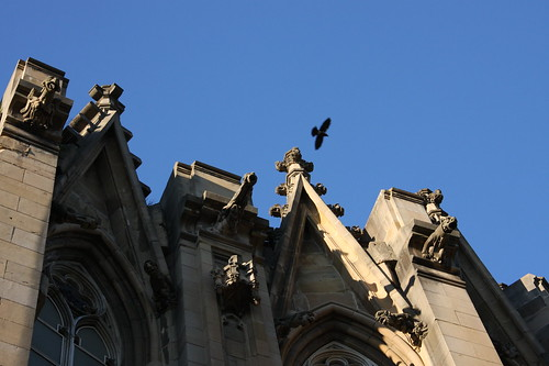 Bird over Vitoria Cathedral
