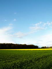 BYG (Blue Yellow & Green) (Jerome Mercier) Tags: leica blue green colors yellow jaune landscape vert bleu paysage couleur naturesfinest leicadigilux3 digilux3 aplusphoto jeromemercier jeromemercierphoto jmbook bookjm