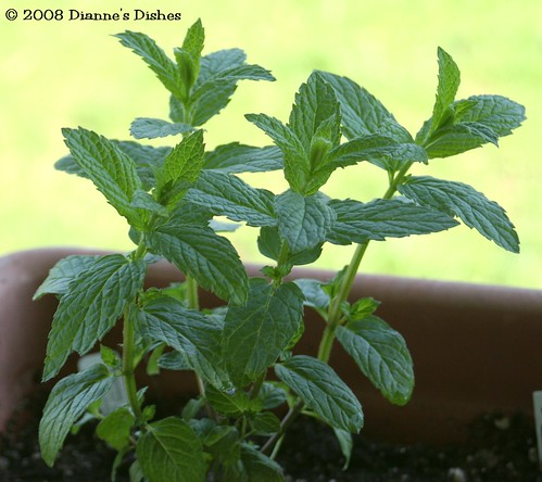 Herb Box Spearmint
