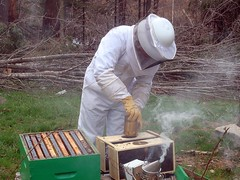Installing new bees