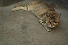 2008-0510-cat16