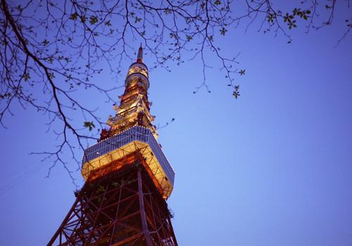 街路樹とタワー