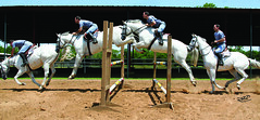 Sequence (Zi Zi) Tags: horse jumping jumper dodger thoroughbred tpc tpcu3 tpcu3l2