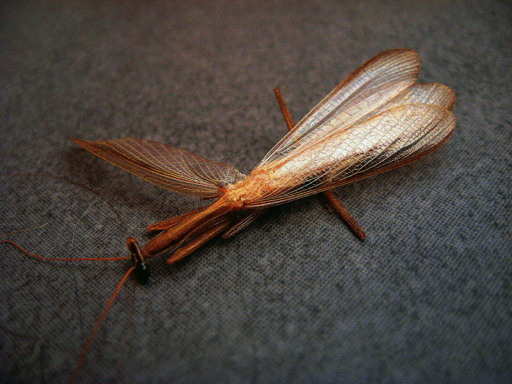 31-05-2011-dead-insect