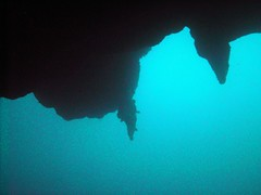 PICT0018 (JoseQ) Tags: blue mar hole great tiburones buceo caribe submarinismo tiburón