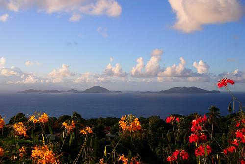 Guadeloupe Archipel les Saintes fleurs by Rh.P.