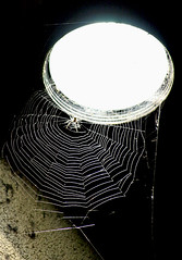 spider web (cool_colonia4711) Tags: light lamp bulb lampe licht spider spiderweb cobweb spinne spinnennetz