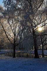 2007_12_22DSC_9838_d01 (iVOMiMiBoRE) Tags: trees winter snow holland tree netherlands nijmegen frost nederland frostedtrees winterinholland frozentrees malvert winterinthenetherlands