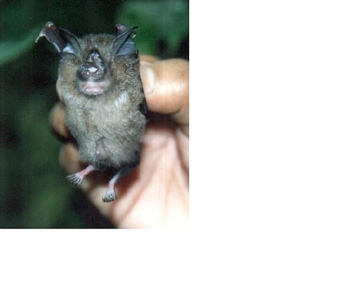 2229981349_e05135fb5a - CRAZY ABOUT BATS! - Science and Research