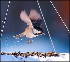Winter Feeding (DF9999) Tags: winter snow birds animals vermont fuji newengland s2pro inspire bestofflickr cubism greatphotographers cherryontop supershot florayfauna fineartphotos naturesgallery mywinners platinumphoto naturephotographs impressedbeauty holidaysvacanzeurlaub superbmasterpiece crystalaward diamondclassphotographer flickrdiamond photostosmileabout goldsealofquality flickrslegend theperfectphotographer digitaleloquence goldenglobe1 natureselegantshots beoriginalinflickr