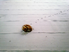 dog ball (AraiGodai) Tags: dog art ball interesting explore zen mobilephone sandpainting k9 dopod dogball araigordai betterthangood raigordai araigodai
