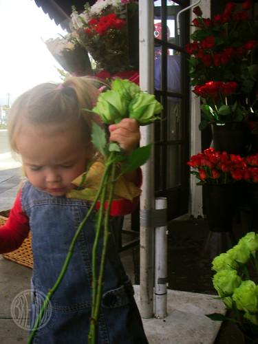 green roses!