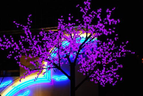 紫色的燈花樹