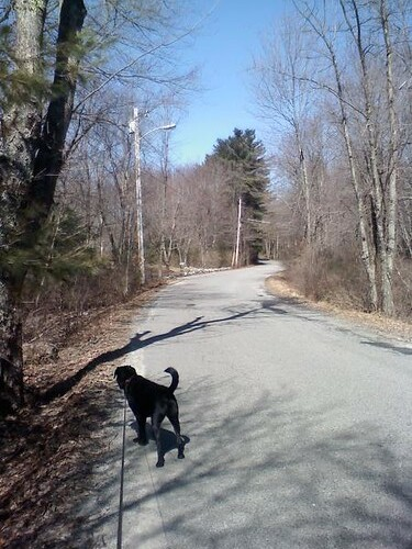 Walking Roxie & My Brain