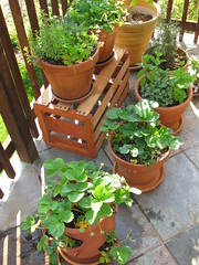 container garden on the patio by thomas pix on Flickr