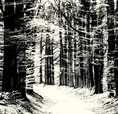 tunnel of light (Lucsaflex) Tags: bw forest spring arnhem smrgsbord beeches countryestate marindaal feeriek beukenlaan aplusphoto lunchwandeling