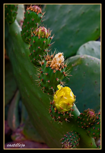 Paleras para la suegra en Fauna y flora2460604145_a86232292c.jpg?v=0