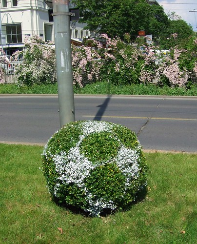 soccer ball bush