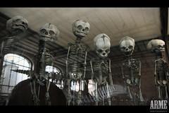 Galerie de paléonthologie et d'anatomie comparée, Paris (onearme) Tags: paris museum dead death babies dinosaur os musée bébé foetus anatomie skullz évolution squelette ossements squelettes dinausaure paléonthologie
