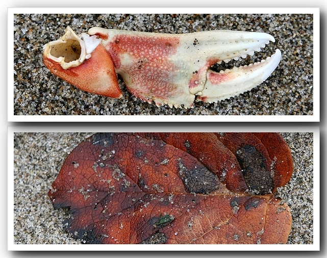 What I saw at The Beach - A Claw and A Leaf