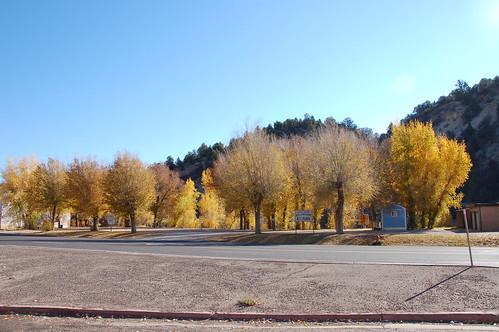 Árboles en Utah