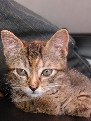 miette, uh, the grandcat