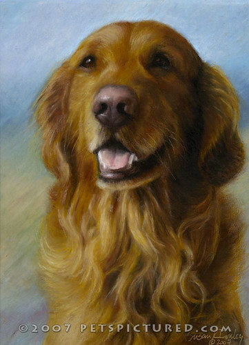 Memorial Portrait of Samson, Golden Retriever