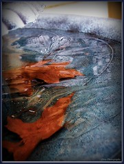Frozen in Time (Domesticated Diva) Tags: texture water fountain leaves outdoors frozen birdbath explore harmony soe picnik timestandsstill frozenintime blueribbonwinner frostbites supershots anawesomeshot impressedbeauty shapeofaheart goldenphotographer flickrphotoaward photostosmileabout adoublefave overtheexcellence goldsealofquality outdoorfountain everydayissunday theperfectphotographer mygoodnessitwascold inspirationartandpoetryexpression multimegashot