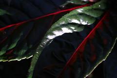 Flash of Red (Perfectoarts) Tags: australia cairns tropicalnorthqueensland canonlenses australianimages canoneoscamera perfectoarts ingriddouglasphotography cairnsphotography ingriddouglasartist