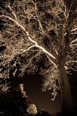 _MG_1143 (Mark Newell) Tags: nottingham light night nightlight