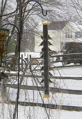 lotsa goldfinches