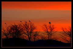Morning roll call (David ZImagery) Tags: lighting winter sky nature animals silhouette sunrise effects scenery bright farm wildlife perspective scenic myfavorites viewpoint enhanced animalsinsects winnebagocounty supershot poeticlicense titlecompany sunmoonsky colourartaward