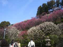 200803009_大田区立池上梅園 002