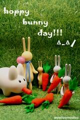 hoppy bunny day!!!  ^-^/ (woolloomooloo) Tags: rabbit bunnies woolloomooloo kidrobot bubblegum canonrebelxt xoxo happyeaster mrclement vinyltoys koziklabbit petitlapin hoppybunnyday 4inchcommonlapin 8inchcommonlapin handmadecarrotsfeltcraft handcraftedcarrotssoftie