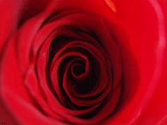 Desde el corazón/From the heart (_Zahira_) Tags: red flower macro rose lafotodelasemana rojo flor rosa olympus nd e500 uro 100vistas 35mmmacro p1f1 ltytrx5 ltytr2 ltytr1 ltytr3 top30red
