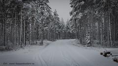 20170222100807 (koppomcolors) Tags: koppomcolors winter vinter skog forest snö snow