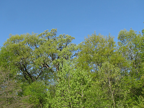The Trees are Alive with the Sound of Warblers