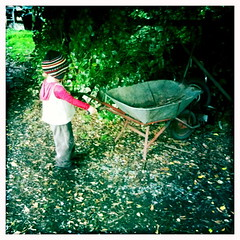 Small child. Large wheelbarrow.