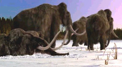 04 mammoth family has to leave