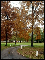walk through the park (indielove) Tags: park autumn fallleaves brown color fall grass leaves indiana