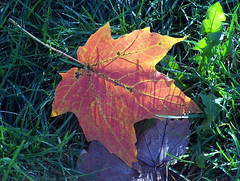 Leaves1007b